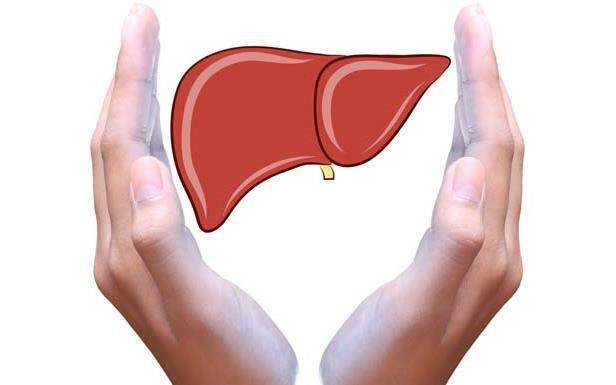 Tại sao cần bảo về gan? Tác dụng của nước Hovenia BIOK đối với gan